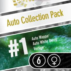 Auto Collection Pack #1 - 6 Graines