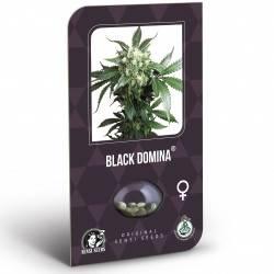 Black Domina Féminisée (Classic Redux Serie)