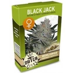 Black Jack Féminisée