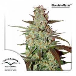 Blue Automazar Féminisée