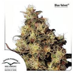 Blue Velvet Féminisée
