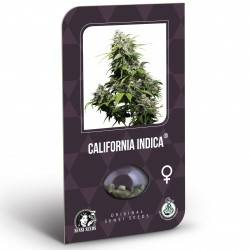 California Indica Féminisée (Classic Redux Serie)