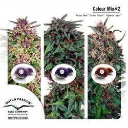 Colour Mix 2 Féminisée