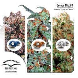 Colour Mix 4 Feminisiert - 6 Graines