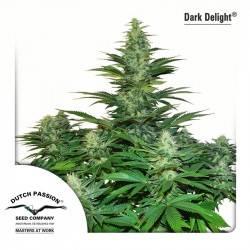 Dark Delight Féminisée