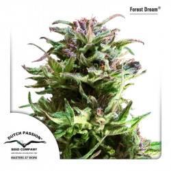 Forest Dream Féminisée