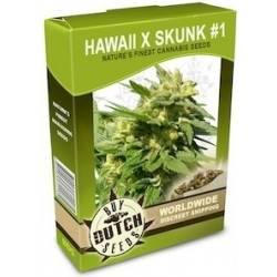 Hawaii x Skunk 1