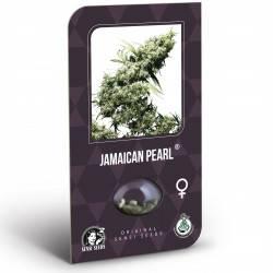 Jamaican Pearl Féminisée (Classic Redux Serie)