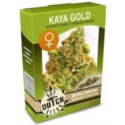 Kaya Gold Féminisée