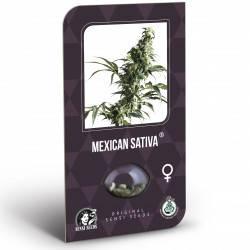 Mexican Sativa Féminisée (Classic Redux Serie)