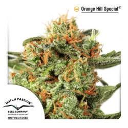 Orange Hill Special féminisée