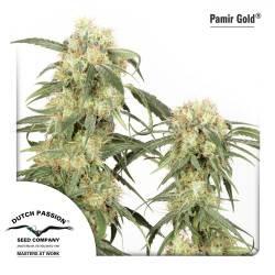 Pamir Gold féminisée