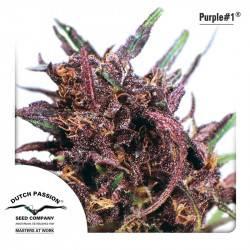 Purple #1 féminisée