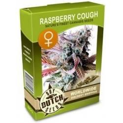 Raspberry Cough Féminisée