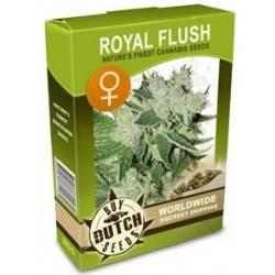 Royal Flush Féminisée