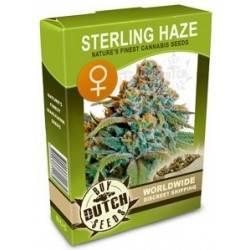 Sterling Haze Féminisée