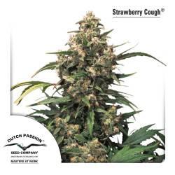 Strawberry Cough féminisée