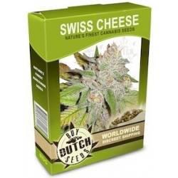 Swiss Cheese - 10 Graines